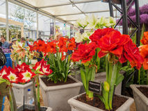 LONDON, GROSSBRITANNIEN - 25. MAI 2017: Rechte Seite Chelsea Flower Show 2017 Stockfotos