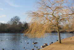 London Hyde Park Royalty Free Stock Photography