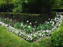 London Hyde Park blommor royaltyfria foton