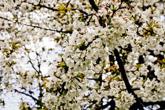 London Hyde Park Flowers Tree Royalty Free Stock Photo