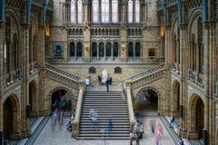 LONDON - JUNI 10: Folk som undersöker det nationella historiemuseet Arkivbild