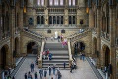 LONDON - JUNI 10: Folk som undersöker det nationella historiemuseet Royaltyfri Foto