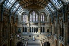 LONDON - JUNI 10: Folk som undersöker det nationella historiemuseet Royaltyfri Bild