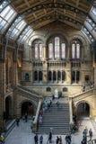 LONDON - JUNI 10: Folk som undersöker det nationella historiemuseet Arkivfoto