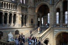 LONDON - JUNI 10: Folk som undersöker det nationella historiemuseet Royaltyfri Fotografi