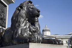 London - lion from Nelson memorial Stock Photos