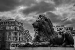 London Lion. Photo of one of the three lions Stock Images