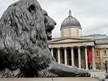 London A lion in trafalgar square Stock Photography