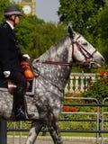 London Mounted police on grey horse. Royalty Free Stock Image
