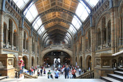 London Museum of Natural Histo. On a Sunday afternoon, the Museum of Natural History is one of the busiest places.  Thanks to lottery funds, admission is free Stock Image