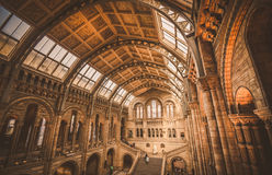 London Museums - Natural History Museum - Hintze Hall Dome. Structure's arches of The Natural History Museum main hall in a horizontal composition Stock Photos