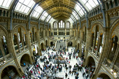London Natural history museum, central hall. Stock Images