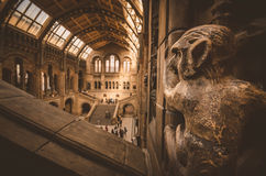 London. Natural History Museum - Monkey's view Stock Images