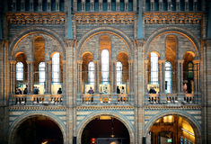 London Natural History museum Royalty Free Stock Image