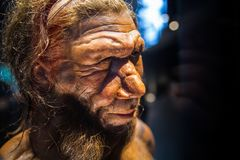 London. Neanderthal Homo adult male, based on 40000 year-old remains found at Spy in Belgium. London, UK - March 11, 2018: Neanderthal Homo adult male, based on royalty free stock images