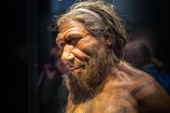 London. Neanderthal Homo adult male, based on 40000 year-old remains found at Spy in Belgium. London, UK - March 11, 2018: Neanderthal Homo adult male, based on stock photography