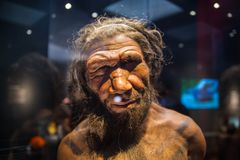 London. Neanderthal Homo adult male, based on 40000 year-old remains found at Spy in Belgium. London, UK - March 11, 2018: Neanderthal Homo adult male, based on stock images