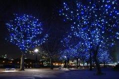 London night. Trees blue lighting on night Royalty Free Stock Images