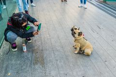 A typical view in London. London October 2018. A view of a tourist taking a picture of her pugs on the millennium bridge in London stock images