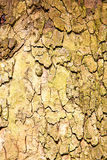 in   london old bark and abstract wood texture Stock Photos