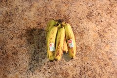 London Ontario Kanada, am 19. März 2018: redaktionelles illustratives Foto von reifen Del Monte-Bananen in einem Obstkorb im Weic Lizenzfreies Stockfoto