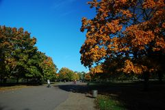 London park. Autumn London park with blue sky, horizontally framed picture stock images
