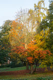London park in autumn Stock Photography