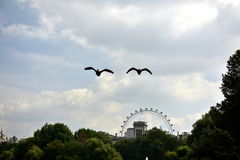 London. Park in London, London eye, birds flying over the water, green trees, blue sky, visiting the museum objects, Bakhingam Palace trip Royalty Free Stock Photography
