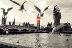 London. Parliament, River, Brigde, Dove, Cloud Royalty Free Stock Photos