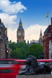 London Trafalgar Square lion and Big Ben. Tower at background Royalty Free Stock Image