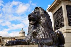 London Trafalgar Square Lion in UK. England Royalty Free Stock Photo