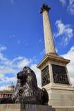 London Trafalgar Square Lion in UK. England Stock Photo