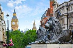London Trafalgar Square lion in UK. England Stock Image