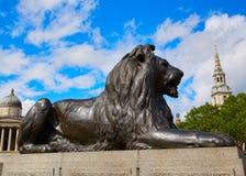 London Trafalgar Square Lion in UK. England Stock Photos