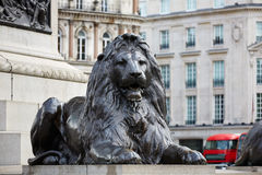 London Trafalgar Square lion in UK. England Royalty Free Stock Images