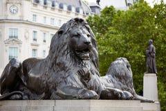 London Trafalgar Square lion in UK. England Royalty Free Stock Image