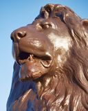 London Trafalgar square, Nelson`s lion head detail. And blue sky background Royalty Free Stock Photos