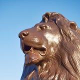 London Trafalgar square, Nelson`s lion head. England, London Trafalgar square, Nelson`s lion head detail under blue sky Stock Photography