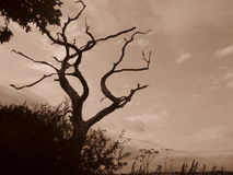 London tree nature sepia mystery  sky branches branches  scary Stock Images