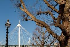 LONDON/UK - 2月13日:在H前面的被日光照射了伦敦飞机树 库存照片