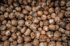 Collection of Leopard Skin Jasper semi precious stones and minerals. LONDON, UK - APRIL 15, 2019: Collection of Leopard Skin Jasper semi precious stones and stock photography