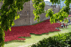 LONDON, UK - AUGUST 22 : Poppies at the Tower in London on Augus. T 22, 2014. Unidentified people Royalty Free Stock Images