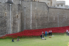 LONDON, UK - AUGUST 22 : Poppies at the Tower in London on Augus Royalty Free Stock Photos