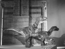 Natural History Museum in London black and white. LONDON, UK - CIRCA JUNE 2017: Dinosaur at the Natural History Museum on Exhibition Road in South Kensington in stock photos