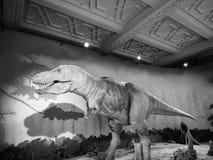 Natural History Museum in London black and white. LONDON, UK - CIRCA JUNE 2017: Tyrannosaur dinosaur at The Natural History Museum on Exhibition Road in South stock photography