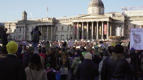 LONDON, UK. January 21, 2017. Women on the march on Trafalgar square, protest against the inauguration of Donald Trump stock video