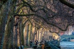 LONDON/UK - LUTY 13: Nasłoneczneni Londyńscy Płascy drzewa obok Zdjęcie Stock
