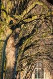 LONDON/UK - LUTY 13: Nasłoneczneni Londyńscy Płascy drzewa obok Fotografia Stock