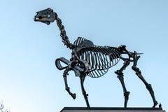 LONDON/UK - 7 MAART: Hans Haacke-het Paard van de standbeeldgift in Trafalgar Stock Afbeeldingen