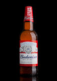 LONDON,UK - MARCH 21, 2017 : Bottle of Budweiser Beer with new twist off cap on black. An American lager first introduced in 1876. Royalty Free Stock Images